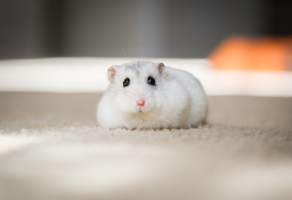 https://dyreverdenen.dk/hamster-tilbehoer